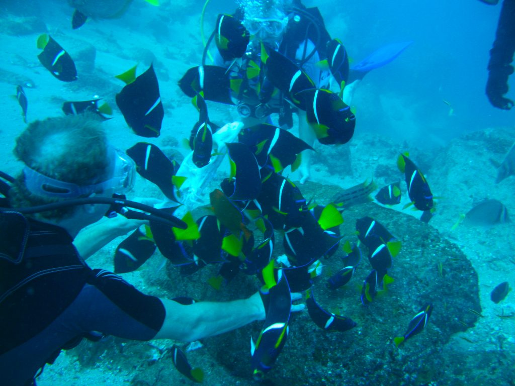 cabo san lucas discover diving tours