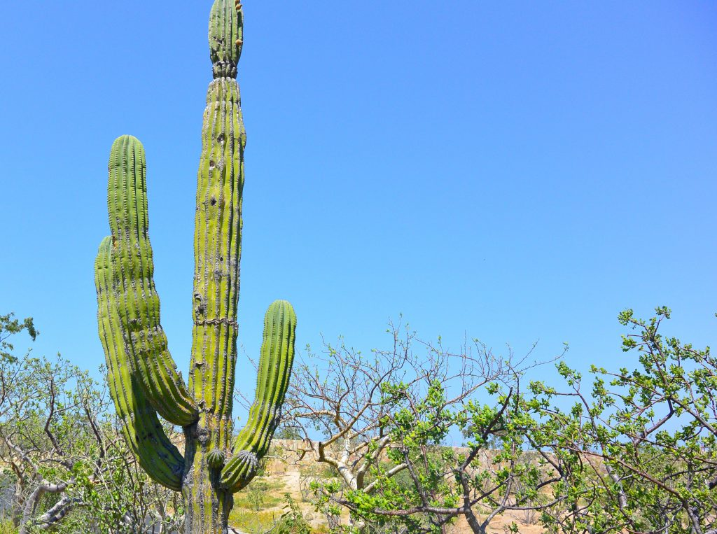 San Jose Del Cabo highlights excursion