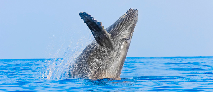 Cabo San Lucas Whale Watching