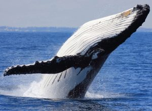 Whale Watching Tours In Cabo